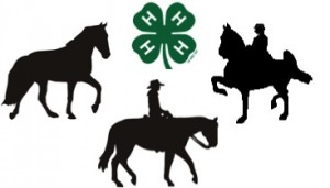 Three horses and 4-H clover