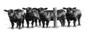 Cover photo for Livestock News Winter 2018