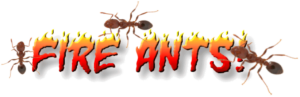 Cover photo for Fire Ant Managament Tips