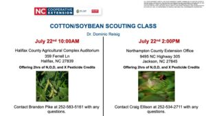 Cover photo for Cotton/Soybean Scouting School
